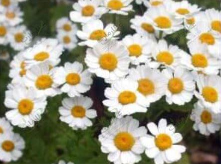 بهترین گیاهان دارویی که مردم بیشتر استفاده می کنند