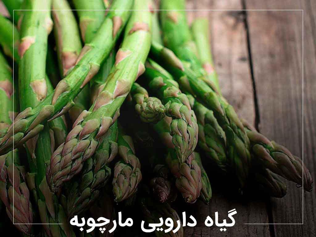 گیاه دارویی ضد ویروس مارچوبه