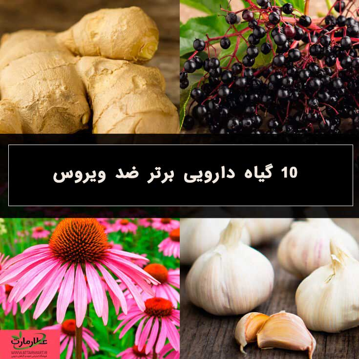 گیاهان دارویی برتر ضد ویروس