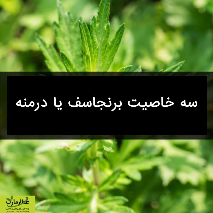 3 خاصیت مهم گیاه برنجاسف یا درمنه