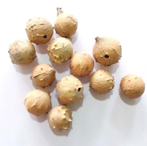 پودر مازو