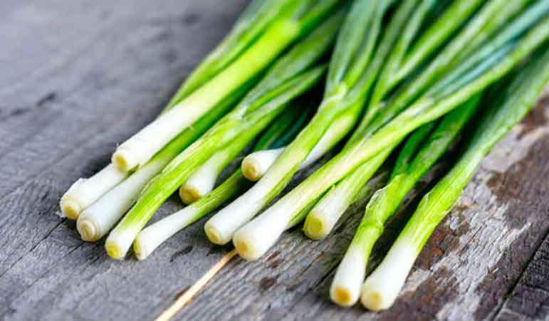 گیاه دارویی پیاز سبز برای درمان زود انزالی