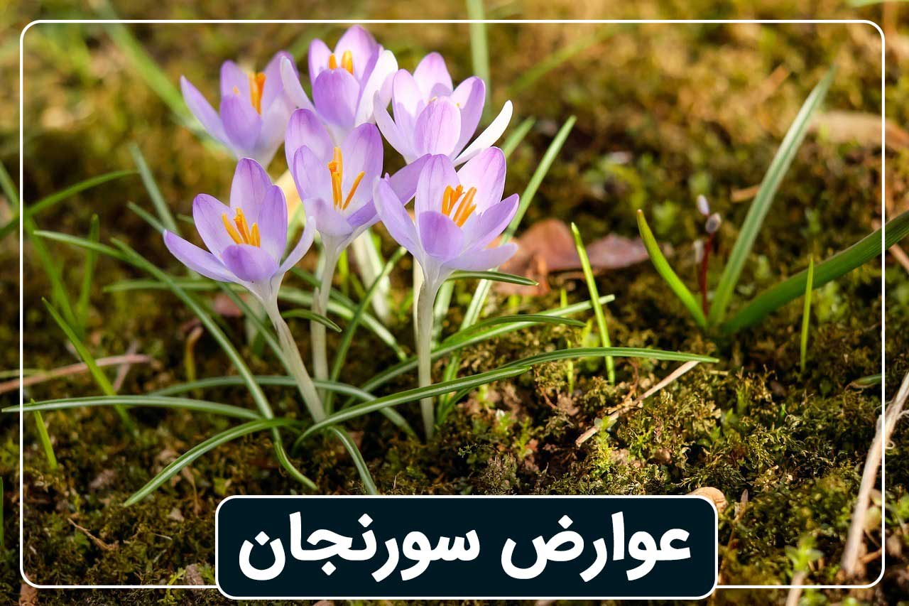 عوارض گیاه سورنجان