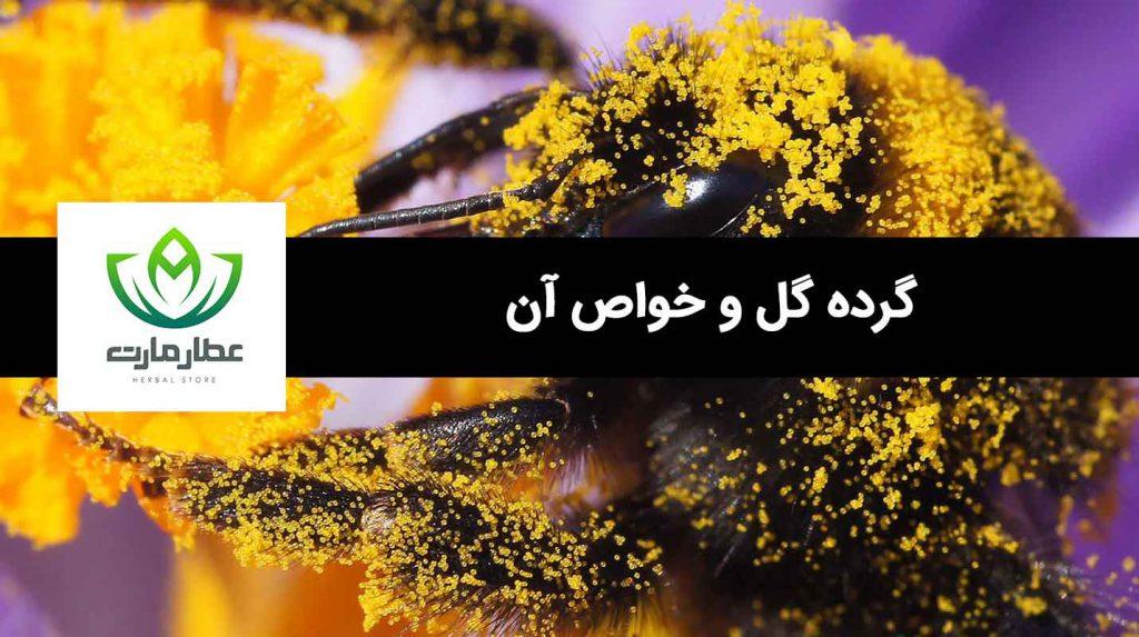 یک عدد زنبور عسل که گرده گل به بدن آن چسبیده است